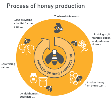 Process of honey production
