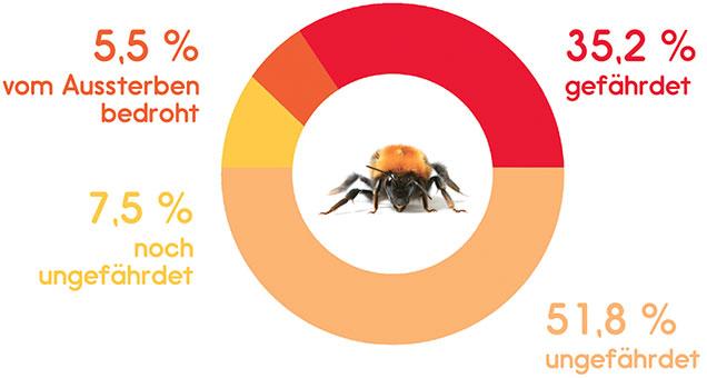 Bedrohung der Wildbiene- Grafik