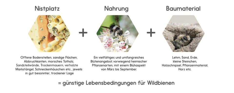 So hilft man Wildbienen