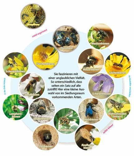Übersicht der Wildbienenarten