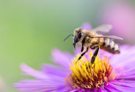 Bienen Stechen