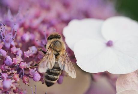 Welche Blumen mögen Bienen nicht? | Bee Careful