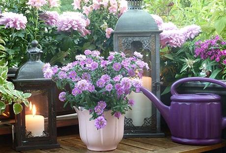 Bienenfreundliche Balkonpflanzen | Das Lieben Bienen | Bee Careful Blutenpracht Auf Dem Balkon Blumen