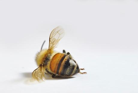 ursachen und folgen des bienensterbens bee careful. Black Bedroom Furniture Sets. Home Design Ideas