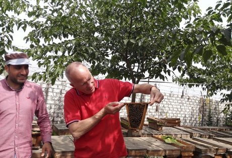 Hero MEA:  protect Egyptian bees