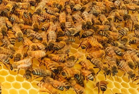 flei ige baumeister wie bauen bienen waben bee careful. Black Bedroom Furniture Sets. Home Design Ideas