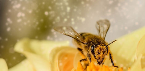 wie lange leben bienen lebenszyklus der honigbiene bee careful. Black Bedroom Furniture Sets. Home Design Ideas