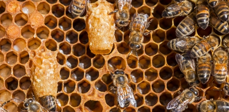 bee_careful_Propolis_Desinfektionsmittel