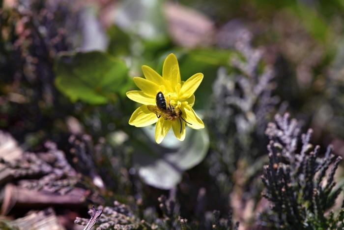 Bienen Im Boden Ganz Genau Diese Bienenarten Leben In Der Erde