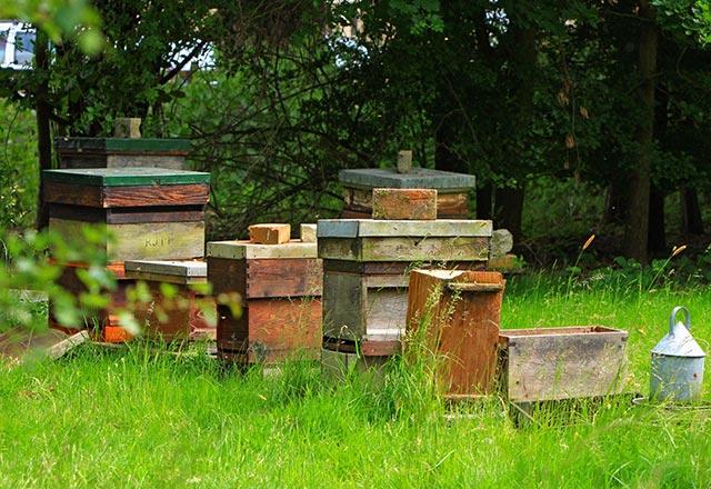 imkern f r anf nger so kann man imker werden bee careful. Black Bedroom Furniture Sets. Home Design Ideas